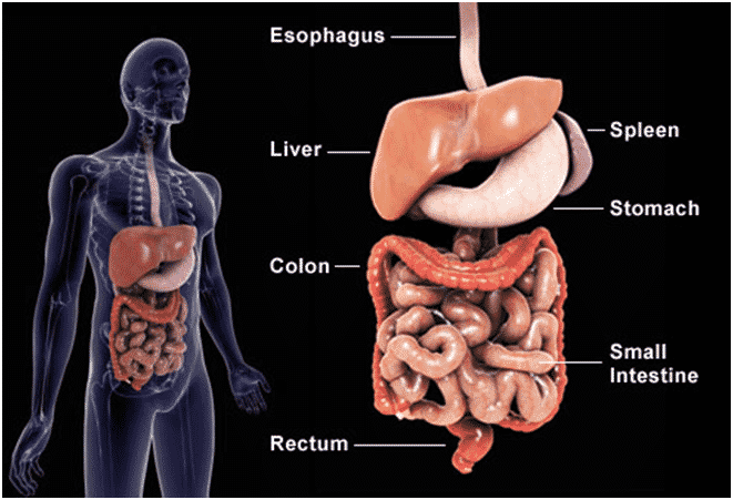 Gastrointestinal surgery in Hyderabad will help you to treat your cancerous and non-cancerous tumours also other intestinal problems